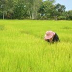 ลงทะเบียน เยียวยาเกษตรกร Farmbook