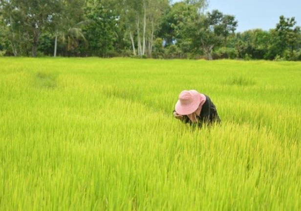 เตรียมเคาะ มาตรการเยียวยาเกษตรกรไทย