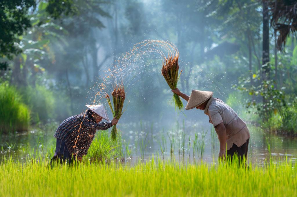 มาตรการช่วยเหลือเกษตรกร เตรียมแจกเงิน 15,000 จำนวน 9 ล้านครัวเรือน