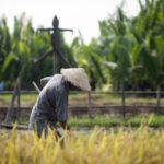 เงินเยียวยาเกษตรกร กลุ่มแรก 8.33 ล้านราย เตรียมรับเงินพรุ่งนี้