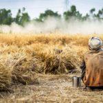เยียวยาเกษตรกร วันนี้โอนอีก 1 ล้านราย เช็คบัญชีได้เลย