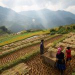ธนาคารเพื่อการเกษตร จ่ายเงินประกันรายได้ข้าว งวดแรก 8.7 แสนราย