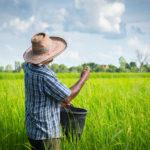 สินเชื่อ ธ.ก.ส. เยียวยาเกษตรกร โครงการไหนยังสามารถกู้ได้บ้าง