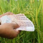 เงินประกันรายได้เกษตรกร จ่ายส่วนต่าง ประกันราคาข้าว งวดที่ 3