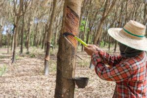 เปิดรายละเอียดประกันรายได้เกษตรกรไทย
