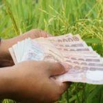 เงินประกันรายได้เกษตรกร โอนให้ชาวนาวันนี้อีก 7 หมื่นราย