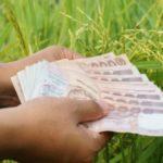 เช็คเงินประกันรายได้เกษตรกร จ่ายส่วนต่างประกันราคาข้าว งวดที่ 8