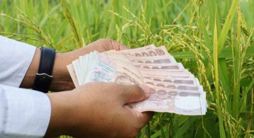 ตรวจสอบเงินประกันรายได้เกษตร จ่ายส่วนต่าง