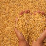 เงินประกันรายได้เกษตรกร จ่ายเงินส่วนต่างประกันราคาข้าว รอบที่ 1 งวดที่ 9