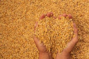 เงินประกันรายได้เกษตรกรผู้ปลูกข้าว รอบที่ 1 งวดที่ 9