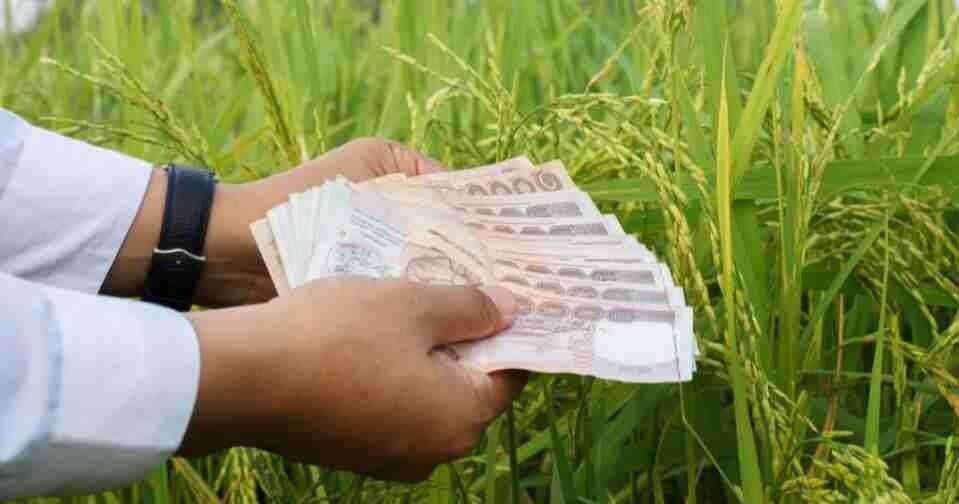 เงินประกันรายได้เกษตรกร ผู้ปลูกข้าว